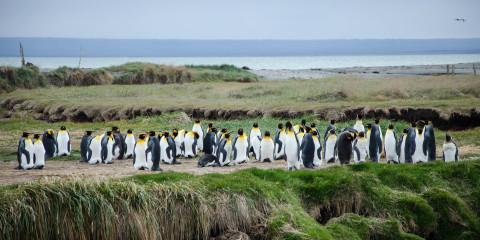 Punta Arenas oder das Ende der Welt