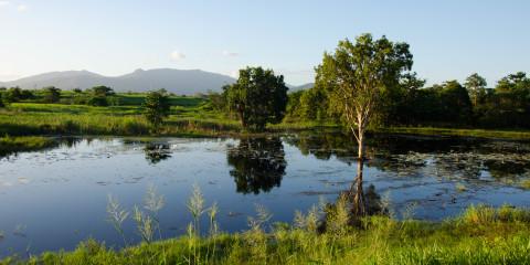 Murray Falls bis Wetlands