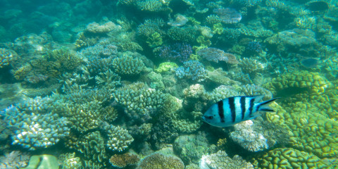 Cairns und Umgebung